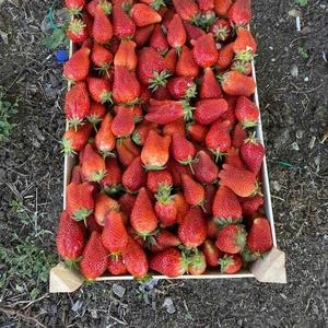 Сезонные фрукты ягоды и овощи